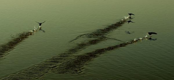 water mark by pradipdasgupta