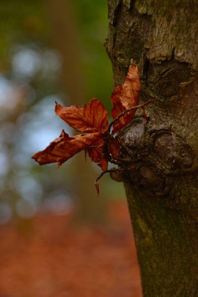 Autumn Colours by Mrsbass