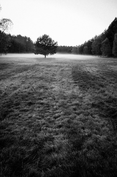 King\'s Forest by StuartAt