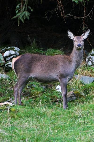 Deer by Margarets