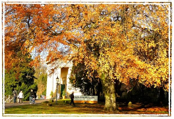 Museum Gardens, York by Rock