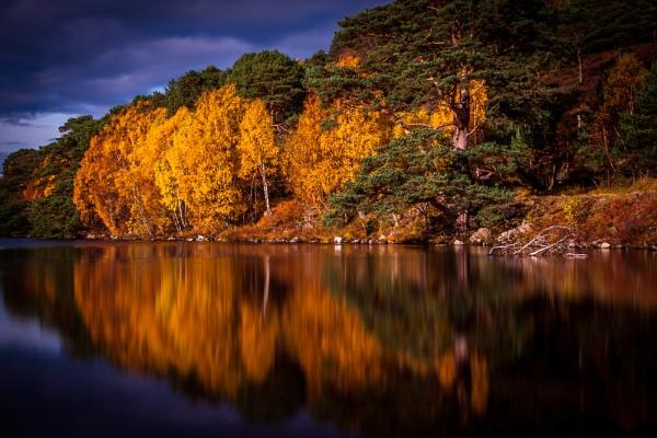 Autumn Gold by John_Frid