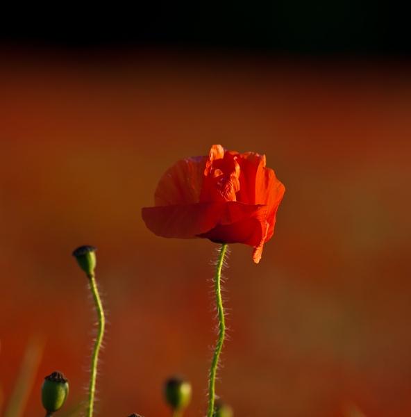 LIGHT OF REMEMBERANCE by michaelo