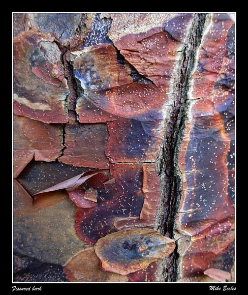 Fissured bark by oldgreyheron