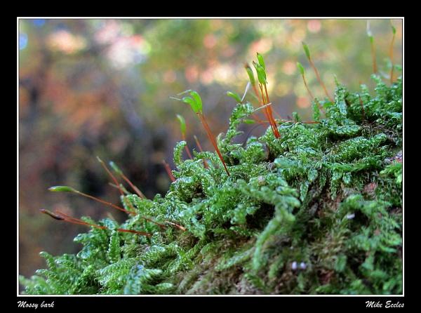Mossy bark by oldgreyheron