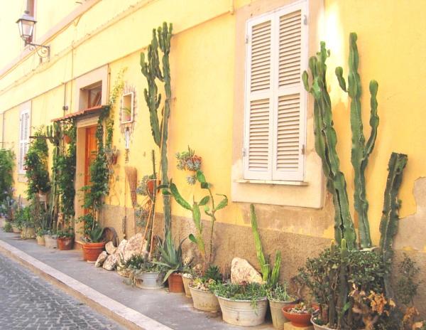 Sidewalk gardening by Averil