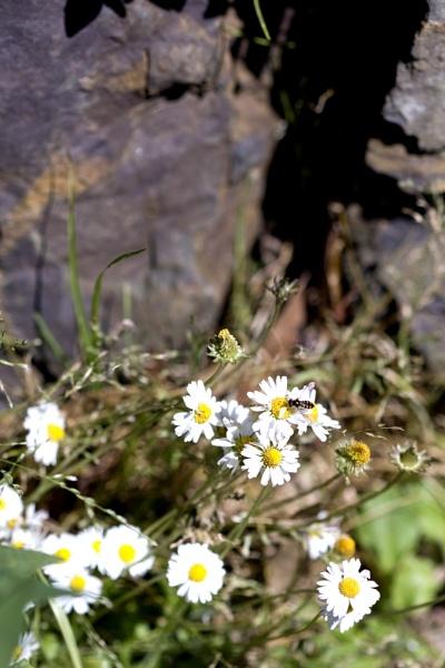 Daisy & Bug by Elfix6