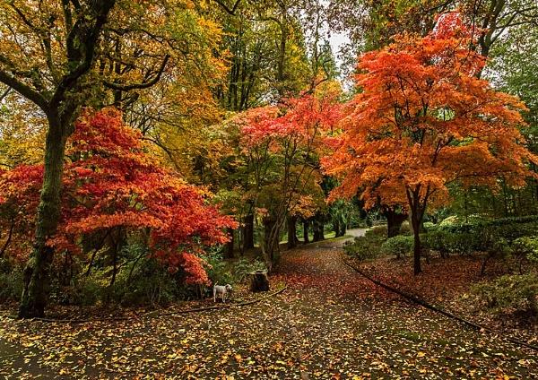Autumn by gary_d