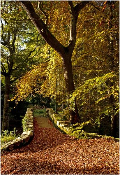 The Bridge in Autumn. by bombolini