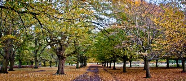 Autumn walk by watsonle