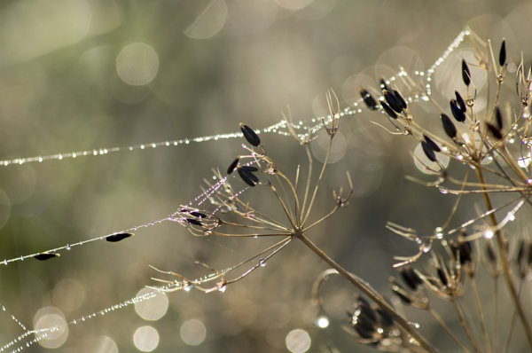 Frosty spiders webs by blackdog64
