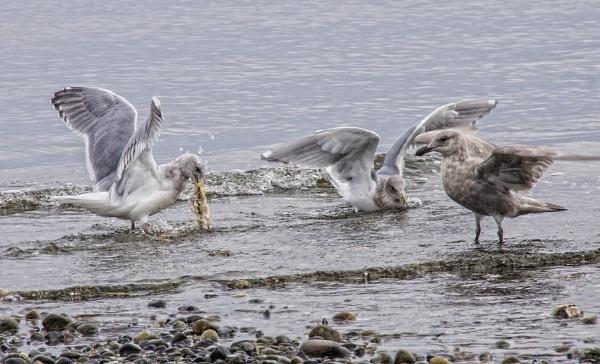 Fish Fight by Daisymaye