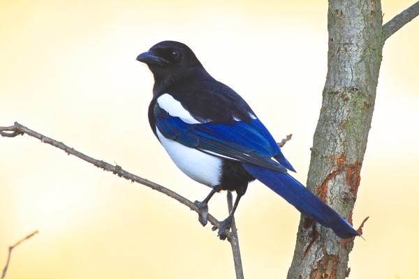 Black and Blue by altosaxman