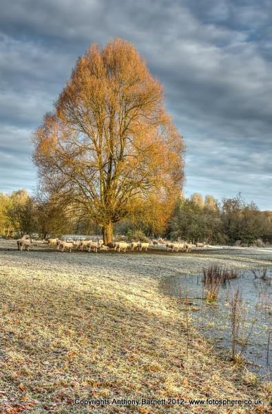 Sheepish Tree by fotosphere