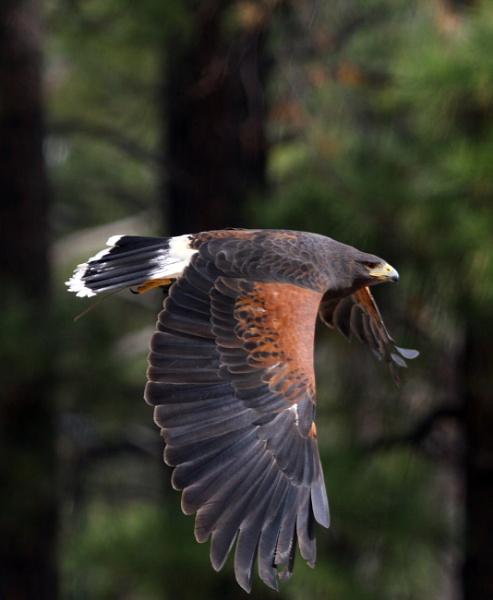 Bird off a stick by losbarbados