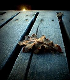 Frosty Oak