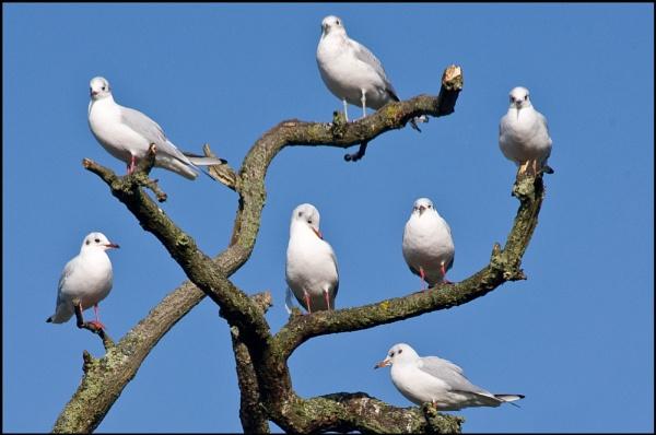 the perching tree