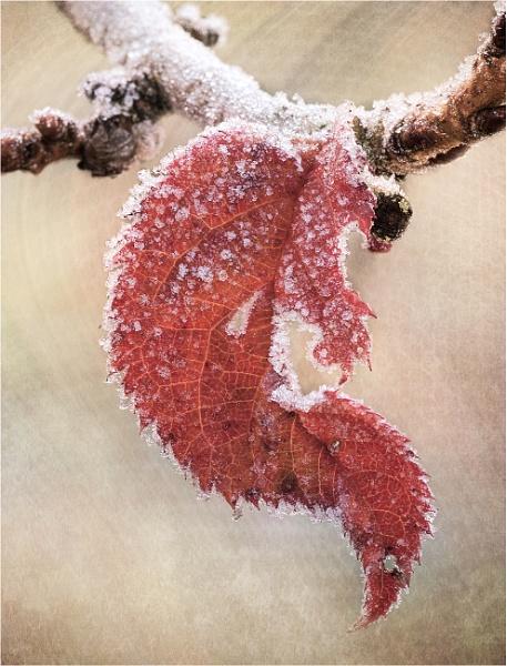 Winter leaf by dormay