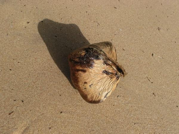 Beach Nuts... by Chinga