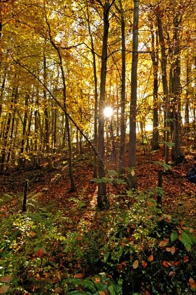 autumn gold by isambard