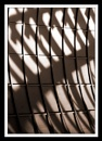 Rib cage by Bonvilston