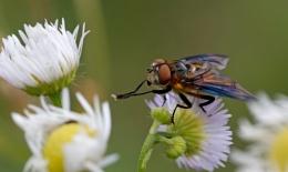 fly & fly
