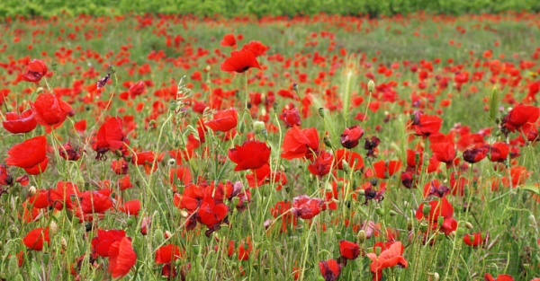 We will remember them by JuBarney