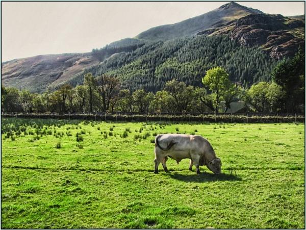 A load of Bull by Jocelia