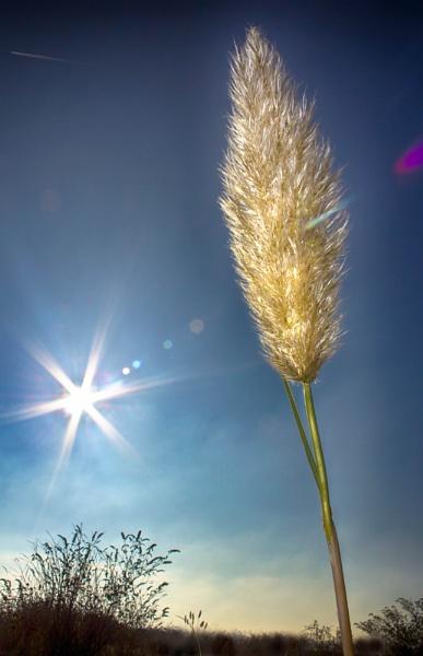 Sun Laser by Rod20