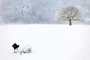 The Forgotten Snowman