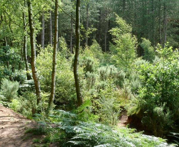 Woodland Walk by Philip_H
