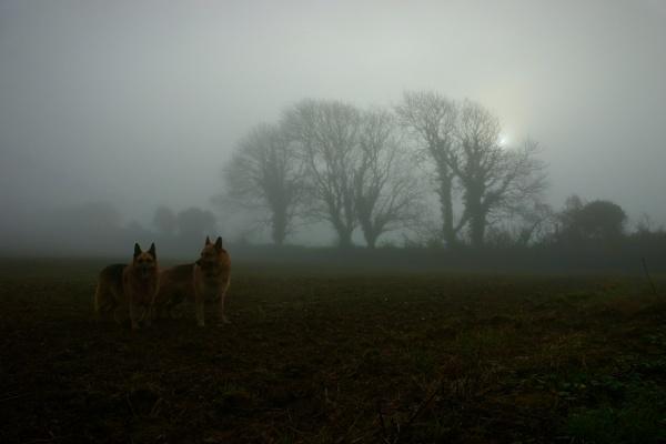 misty morning by sirhcelah100