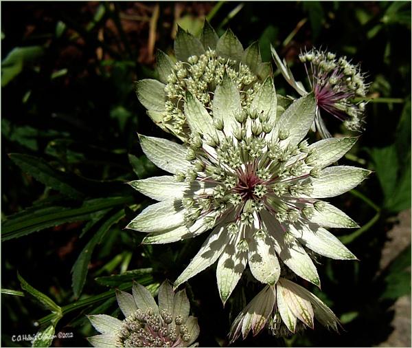 Flower in an Italian Garden by Humblebee