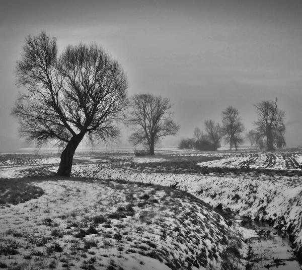 Frozen Landscape by crissyb