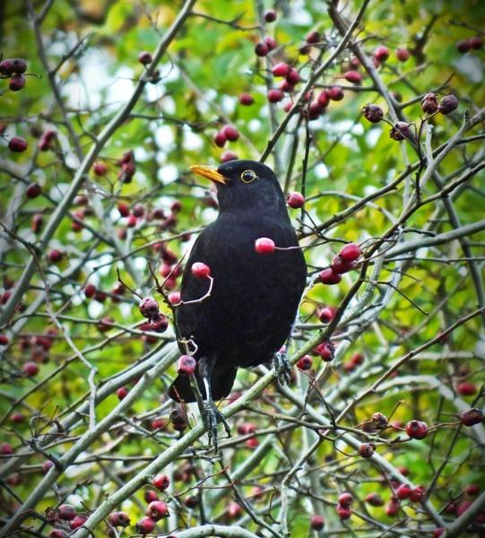 Freebird.......... by crissyb