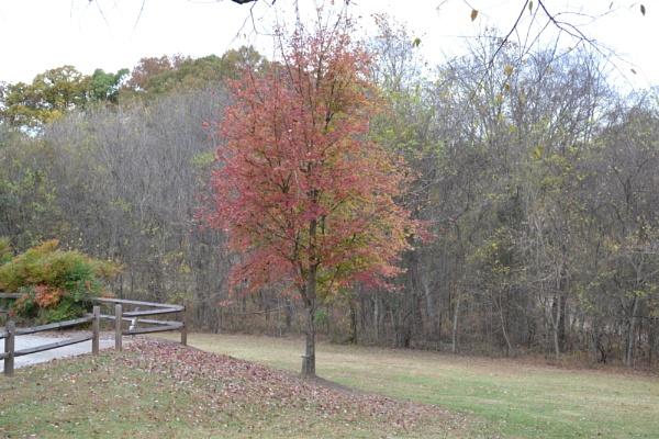 Fall Tree by Jdalton23