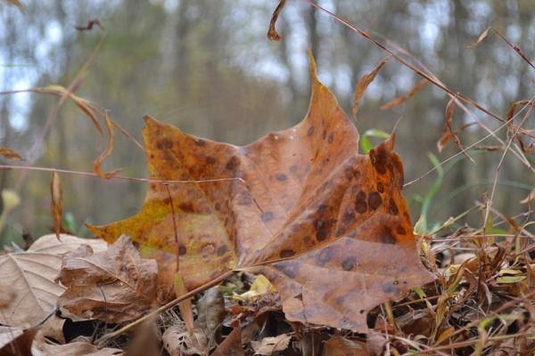 Leaf by Jdalton23