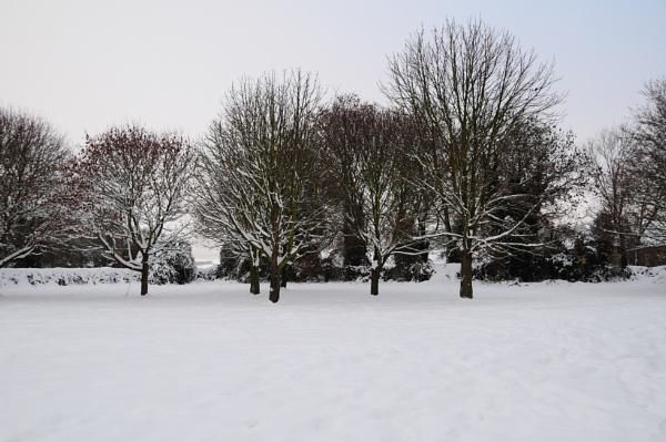 Tree\'s and Snow by Nikonuser1