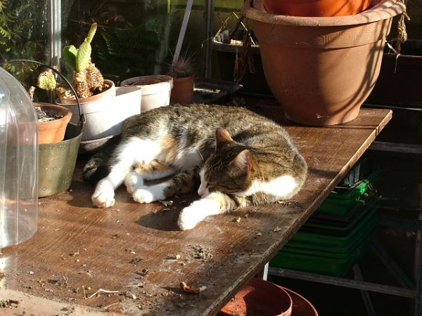 Sleep in the sun by MidnightMaya