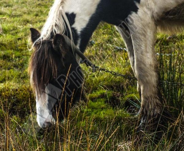 Horse by Bingsblueprint