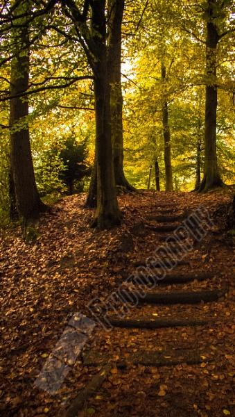 Penllergare Valley Woods by Bingsblueprint