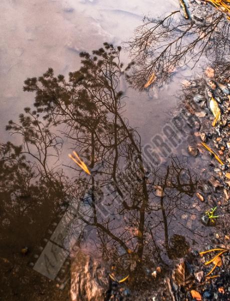 Reflection by Bingsblueprint