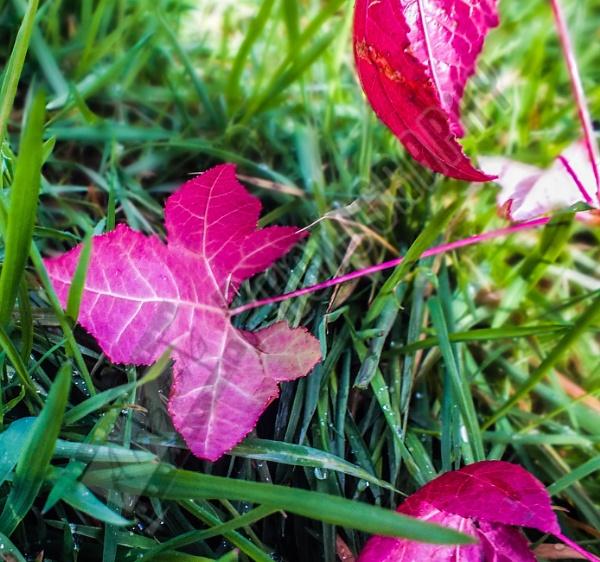 Leaves by Bingsblueprint