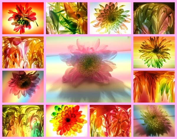 Petals by Mototaur