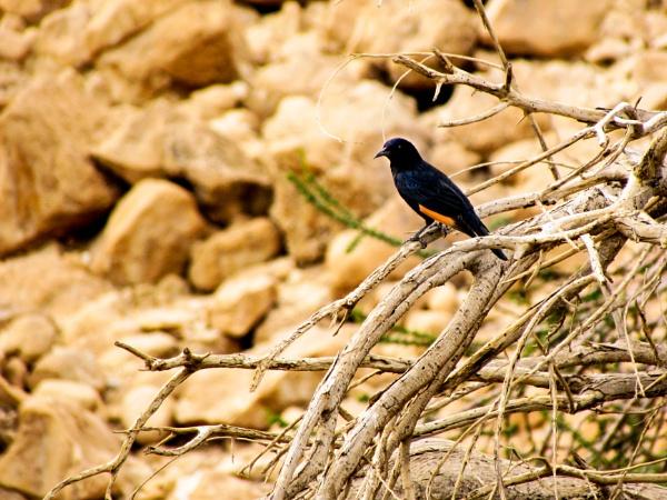 Desert Bird by netz