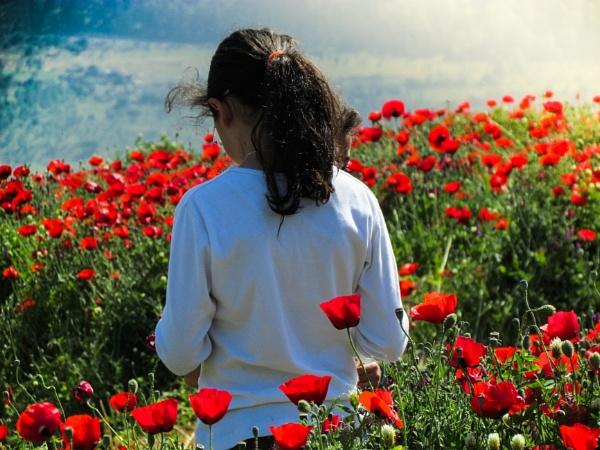 red field by netz