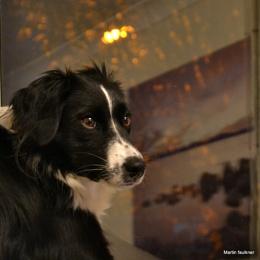 Sasha my dog