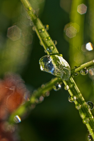 Water Droplet by Boyo2406