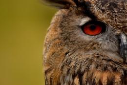 Beasley's Eye