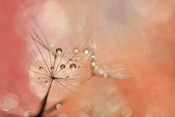 Waterdropps by SenangAnggrek
